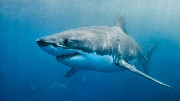 Is human noise pollution affecting our sharks?