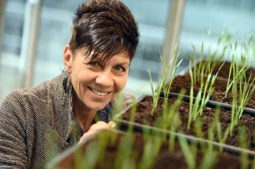 Jill Farrant, a professor of molecular and cell biology at the University of Cape Town, hopes that unlocking the genetic codes o