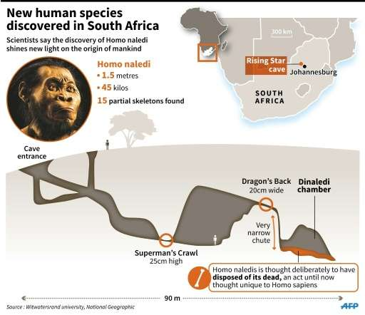 Maps and photo of Homo naledi, whose fossilised bones were discovered in South Africa