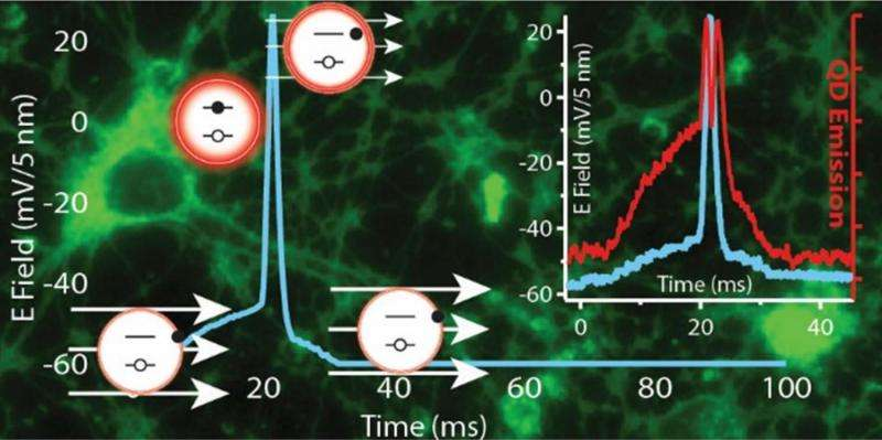 Navy researchers recruit luminescent nanoparticles to image brain function