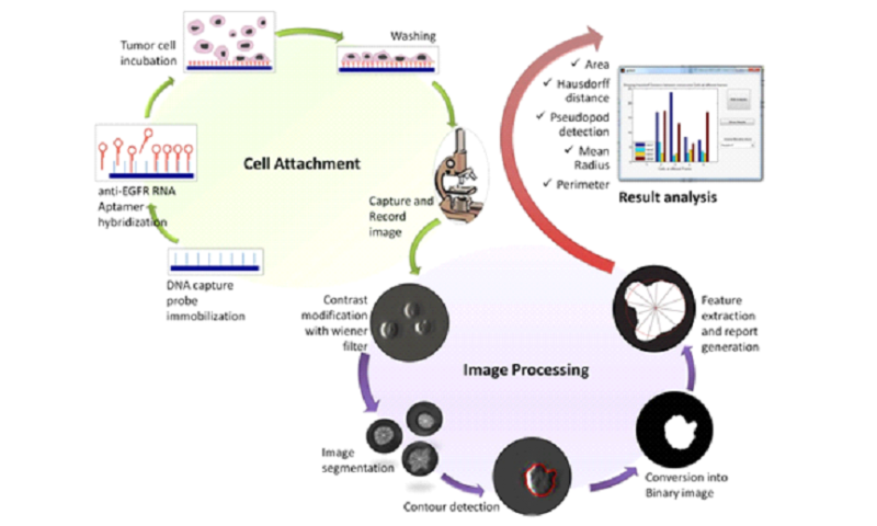 One-step tumor detection from dynamic morphology tracking on aptamer grafted surface