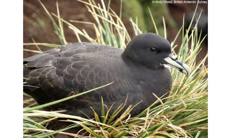 Petrels tracked across the Oceans