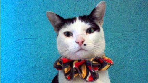 Rainbow cat collars may save birds