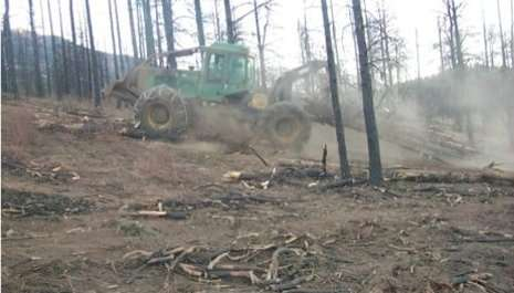 Salvaging the ecosystem after salvage logging