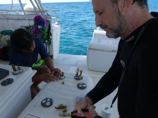 Scientist Diego Lirman (R) from the University of Miami, shows a volunteer how to make coral cookies, which will be nailed onto
