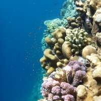 Self-regulating coral protect themselves against ocean acidification