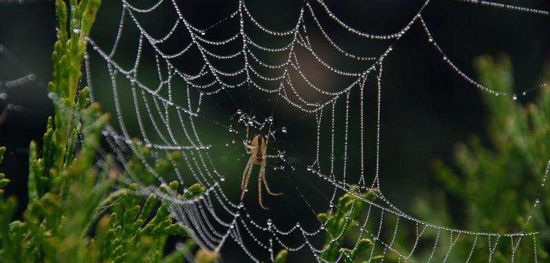 Spider signal threads reveal remote sensing design secrets