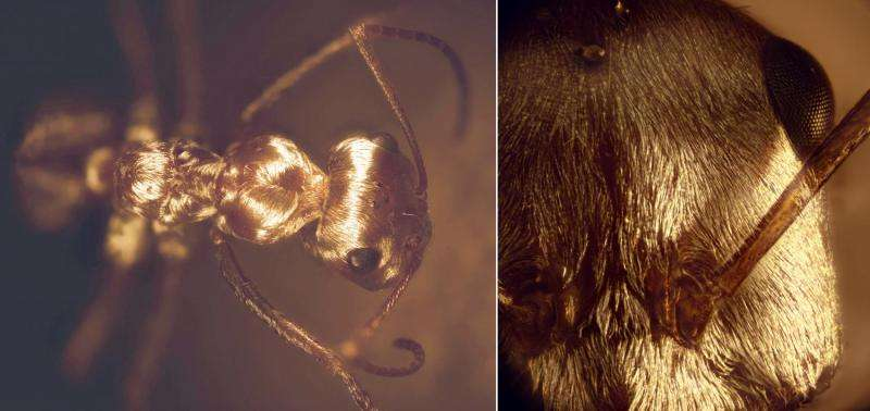 Saharan silver ants can control electromagnetic waves over extremely broad spectrum range