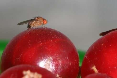 Stop fruit flies plants
