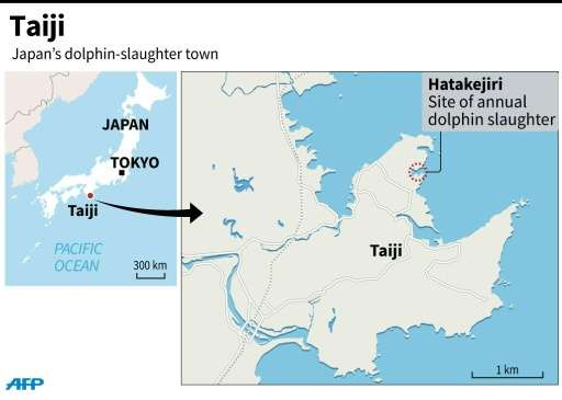 seasons first dolphins killed in annual japan hunt