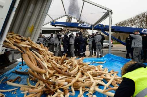 Three tonnes of illegal ivory were destroyed in a public ivory crush on February 6, 2014 at the Eiffel tower in Paris, part of i
