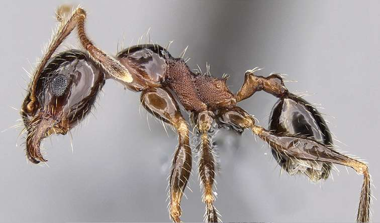 Tramp ant caught globetrotting under false name