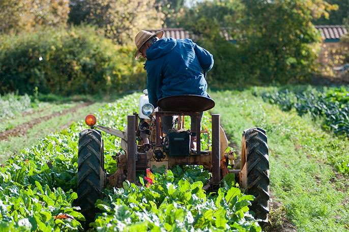 Up to 90 percent of Americans could be fed entirely by local agriculture