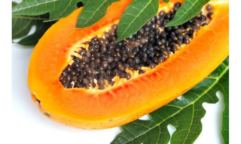 Using ozone to protect papaya exports