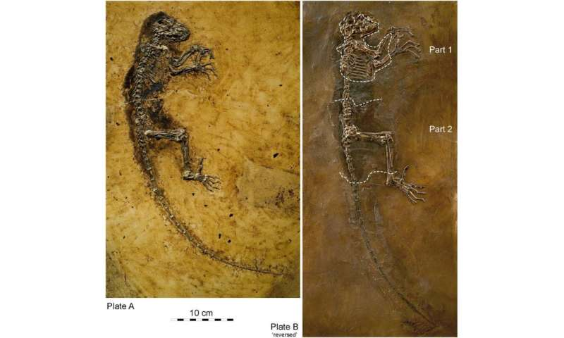 Was Darwinius a little longer in the tooth than previously thought?