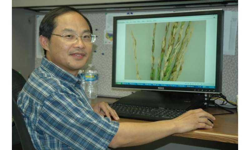 With organic rice in demand, scientists to help farmers improve production