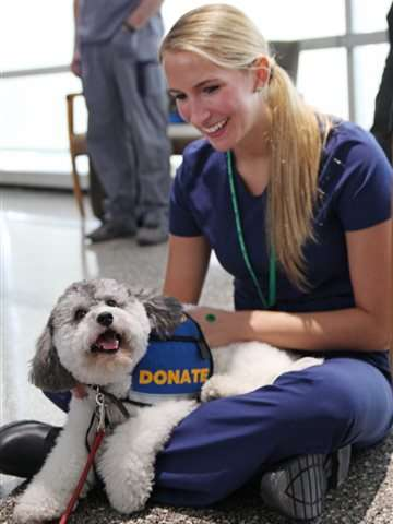 4-legged healers soothe hospital's stressed-out docs, nurses
