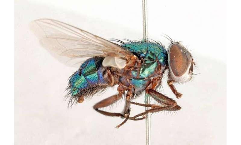 Buzz, buzz, slap! Why flies can be so annoying