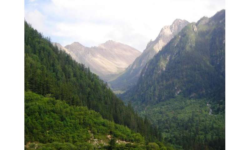 China's forest recovery shows hope for mitigating global climate change