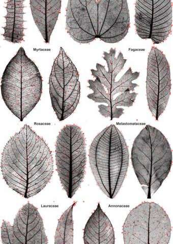 Computer vision can help classify leaves