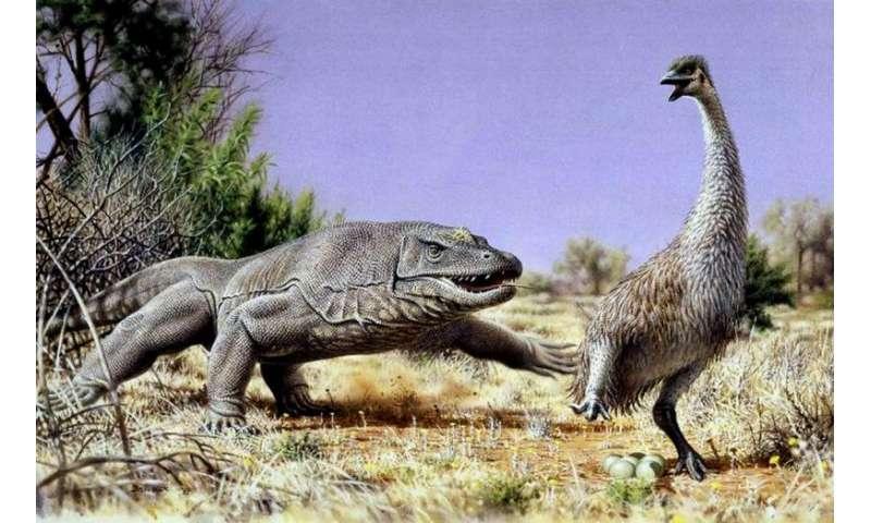 CU-Boulder study: Ancient extinction of giant Australian bird points to humans