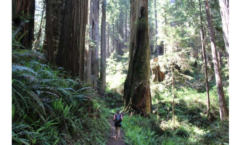 Ecotourism, natural resource conservation proposed as allies to protect natural landscapes