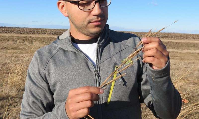 Entomologist discovers new insect species on prairie cordgrass