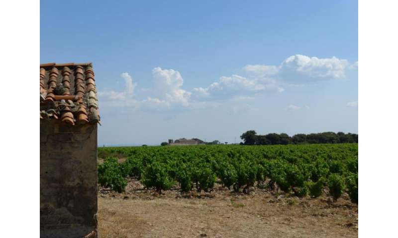 Global warming pushes wines into uncharted terroir