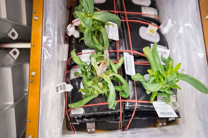 How mold on space station flowers is helping get us to Mars
