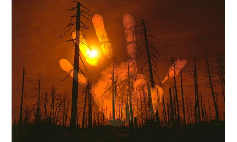 Humans settled, set fire to Madagascar's forests 1,000 years ago