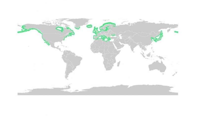 Land plant became key marine species