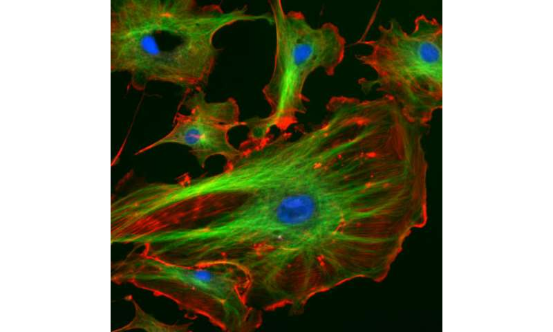 New way to treat cancer and vessel diseases