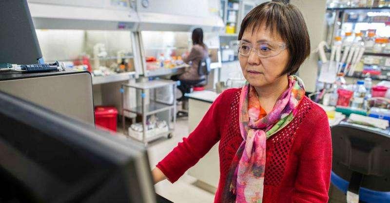 NREL's Min Zhang keeps her 'hugs' happy, leading to biofuel breakthroughs