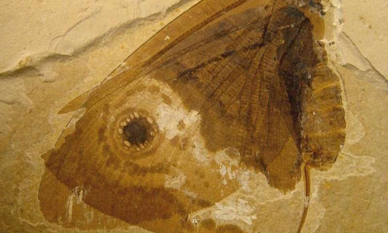 Smithsonian scientists discover butterfly-like fossil insect in the deep Mesozoic