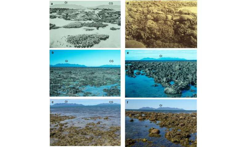 Study accurately dates coral loss at Great Barrier Reef