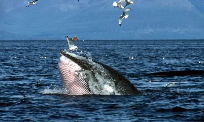 Ten years after the Thames whale, how are Britain's sea mammals faring?
