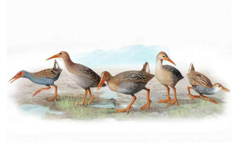The five bird species that darwin couldn't discover in Madeira and the Azores