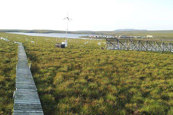 UD prof studies how permafrost thawing affects vegetation, carbon cycle