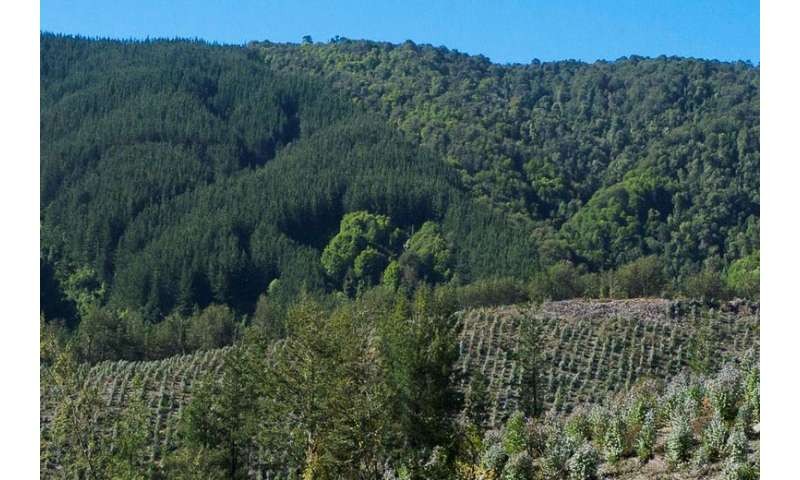 Researchers find effective recipe for slowing deforestation