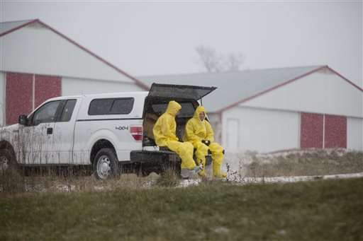 156K chickens added to list of poultry being euthanized