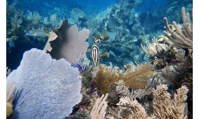 Big fish -- and their pee -- are key parts of coral reef ecosystems