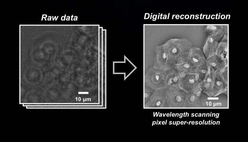 New technique greatly enhances digital microscopy images