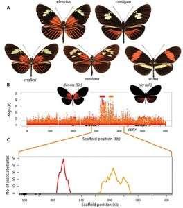 The beauty of butterflies