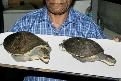 A new species of freshwater turtle has been discovered in Papua New Guinea, according to researchers from the University of Canb