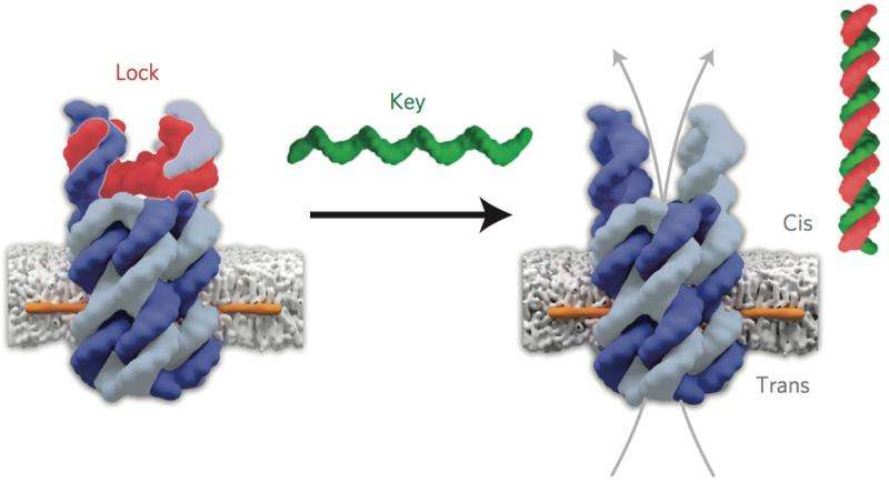 DNA 'building blocks'