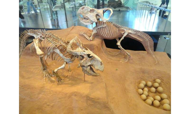 Why frills put female dinosaurs in the mood for love