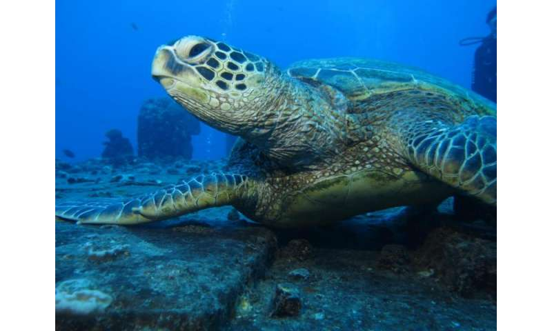 New study reveals strong connections between reef health and land management in Hawaii