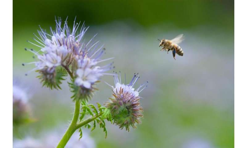 Increasing pollinator numbers and diversity a possible way to increase crop yields