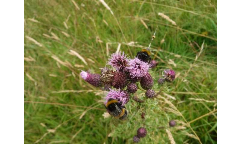 Selfish bumblebees are not prepared to share