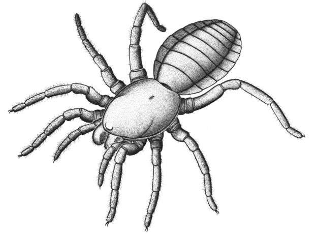 Ancient fossil marks bridge between early arachnids and modern spiders
